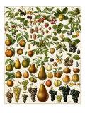 Edible Fruits