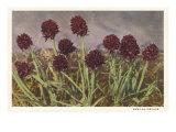 Spiky Flowers in Field  Vanilla Orchids