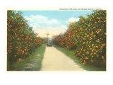 Orange Grove  Florida
