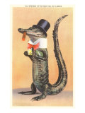 Alligator in Top Hat