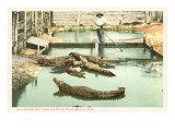 Alligator Joe  Palm Beach  Florida