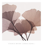Ginkgo Leaves I