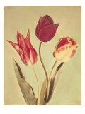 Spring Color I