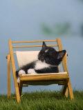 Domestic Cat  Kitten Sleeping on a Deckchair