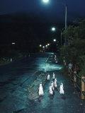 Black Footed Jackass Penguins Walking Along Road at Night  Boulders  South Africa