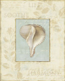 Soothing Words Shells IV