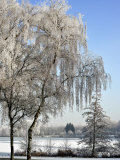 Frozen Pond in Park Landscape with Birch Trees Covered in Hoarfrost  Belgium