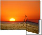 Giraffes Stretch their Necks at Sunset  Ethosha National Park  Namibia