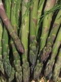 Mary Washington Variety of Asparagus in a Harvest Basket (Asparagus Officinalis)