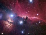 The Horsehead Nebula Region