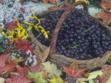 Swenson Red Grapes in a Harvest Basket Surrounded by Fall Flowers and Autumn Leaves