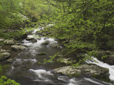 Mountain Stream in Early Spring  Great Smoky Mountains National Park  Tennessee