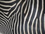 Close-Up of Grevy's Zebra Stripes  Equus Grevyi  Africa