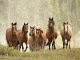 Horses on Ranch in Montana During Roundup