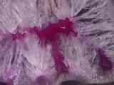 Close-Up of an Agate Quartz Geode  Brazil