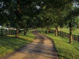 Tree-Lined Winding Road and Fences at First Light Between Pastures  Kentucky  USA