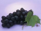 Black Seedless Grapes  Black Beauty Variety (Vitis)