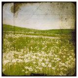 Field I Giclée par Ingrid Blixt
