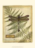 Royal Dragonflies III