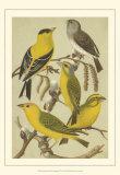 Pet Songbirds III