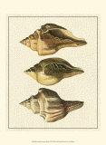 Crackled Antique Shells VI