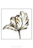 Tulip Sketch III