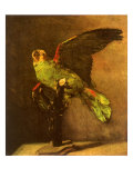 Green Parrot on Perch  1886