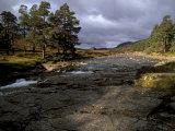 Scots Pines and Upper Dee Valley Near Inverey  Aberdeenshire  Highland Region  Scotland  UK