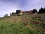 Castello Di Brolio and Famous Vineyards  Brolio  Chianti  Tuscany  Italy  Europe