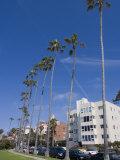 La Jolla  Near San Diego  California  United States of America  North America