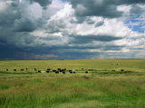 Cattle Ranching  N3 Highway  South Africa  Africa