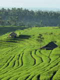 Landscape of Lush Green Rice Terraces on Bali  Indonesia  Southeast Asia