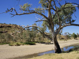 Dry Bed of Todd River  Alice Springs  Northern Territory  Australia  Pacific