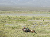 Argentine Cowboys in the Pampas  Near Malargue  Argentina  South America