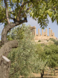 Olive and Almond Trees and the Temple of Juno  Valley of the Temples  Agrigento  Sicily  Italy