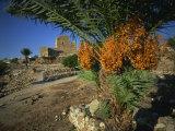 Byblos  Lebanon  Middle East