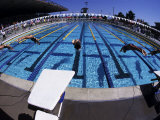 Women Diving into the Pool to Start a Swimming Race
