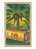 Dromedary Golden Dates
