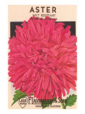 Aster Seed Packet