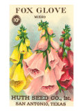 Fox Glove Seed Packet