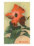 Maui  Hibiscus Blossom