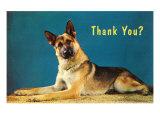 Thank You Quizzical German Shepherd
