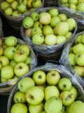 Fresh Apples  Beulah  Lake Michigan Shore  Michigan  USA