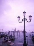 Group of Gondolas  Venice  Italy