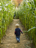 A young boy wanders a corn maze at the Moulton Farm  Meredith  New Hampshire  USA