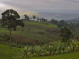 Lush Green Landscape between Bonga and Mizan Teferi  Ethiopia
