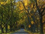 Meems Bottom Covered Bridge  Shenandoah County  Virginia  USA