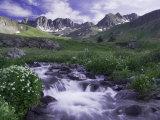 Wildflowers  Ouray  San Juan Mountains  Rocky Mountains  Colorado  USA