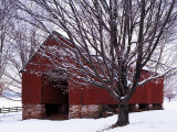 Barn and Maple after winter storm  Fairfax County  Virginia  USA