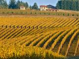 Black Walnut Inn and Vineyards of Bella Vida and Maresh  Dundee  Oregon  USA